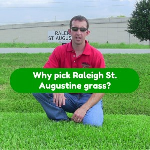 why pick raleigh st augustine grass